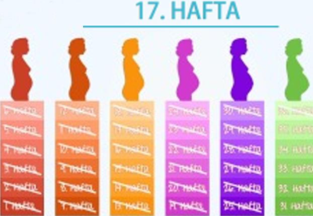 17. Hafta - Bebeğinizin ter bezleri oluşmaya başladı.