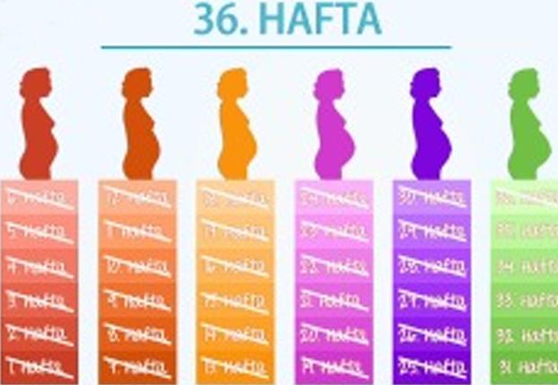 36. Hafta - Bebeğiniz nihayet doğum kanalınıza yerleşmeye başladı.