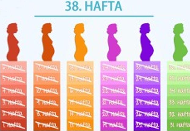 38. Hafta - Bebeğinizin sinir sistemi oldukça olgunlaştı.